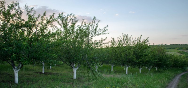 The First Atlas Containing Information on all Ecologically Certified Producers was Launched in Moldova