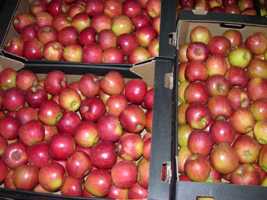 Russia Banning Moldovan Fruits and Vegetables Import Through Belarus