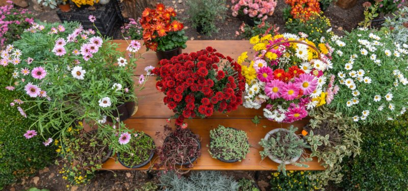 Exhibition-Fair of Flowers and Gardening at Botanical Garden in Chisinau. FOTO