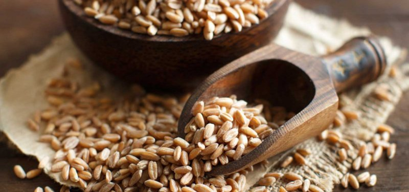 Spelt, a Grain with Miraculous Effects. What Spelt Products are Made in Moldova