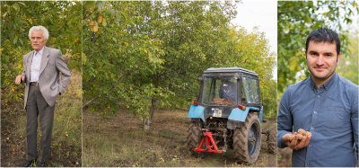 Growing of Organic Walnuts in the Village of Oliscani