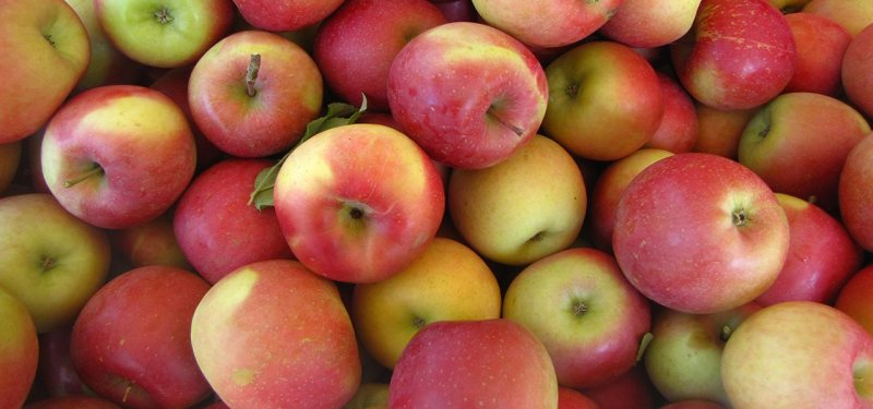 Moldovan Apples are Ready to Conquer the Indian Market