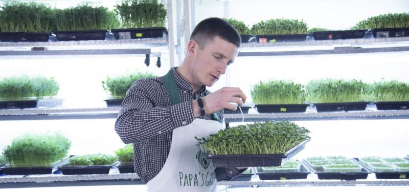 Microgreens Made in Moldova - a New Generation of Superfoods