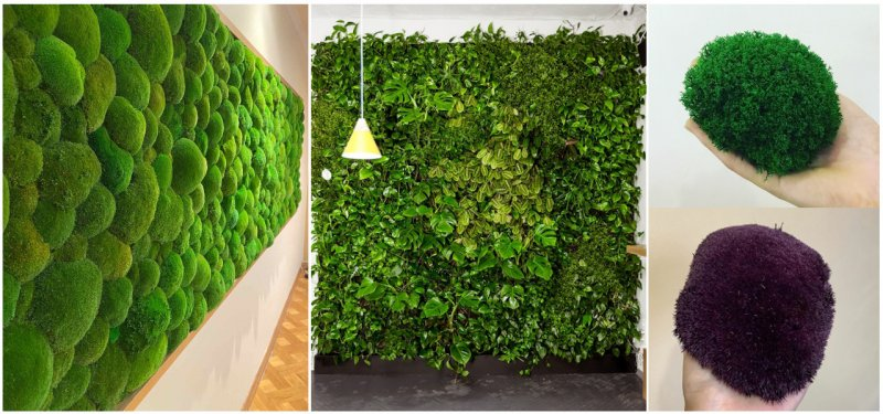 New in Moldova - Decorations Made with Stabilized Moss