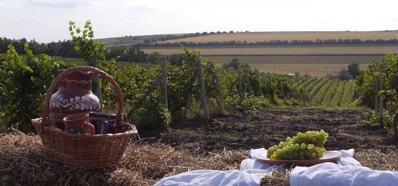 In 2018, the Harvest of Grapes in Moldova was the Highest in the Last 10 Years