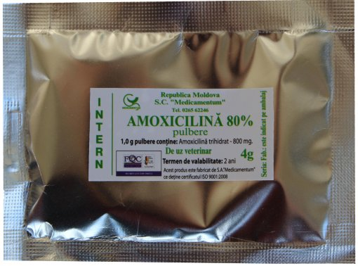 Amoxicillin Powder 80%